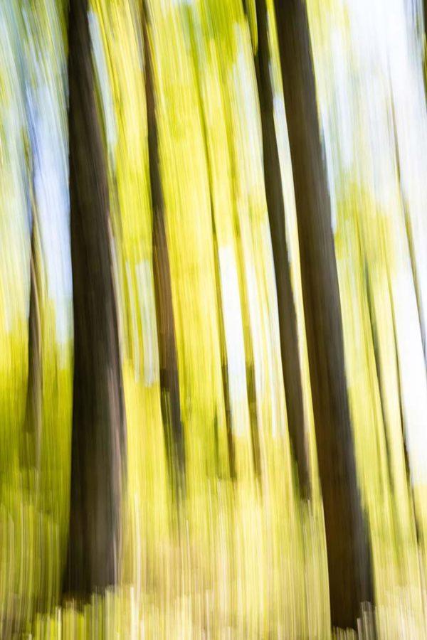 stage photo pays basque en forêt d'iraty