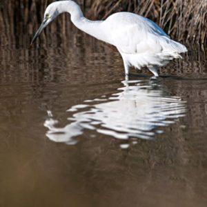 stage oiseaux au teich